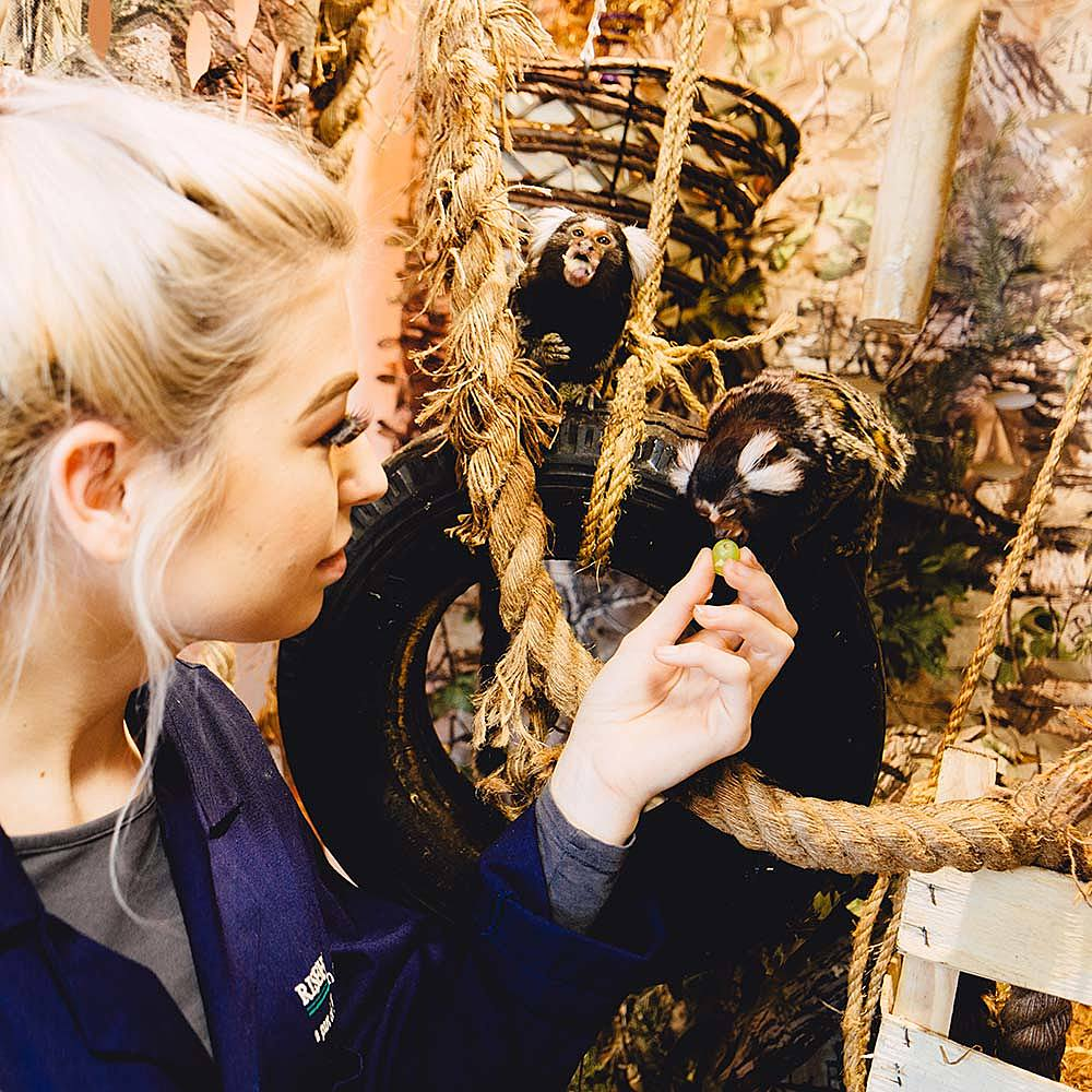 A student on an Animal Management course at Riseholme College feeding marmosets